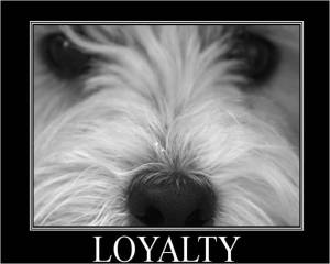 Photo of loyal dog